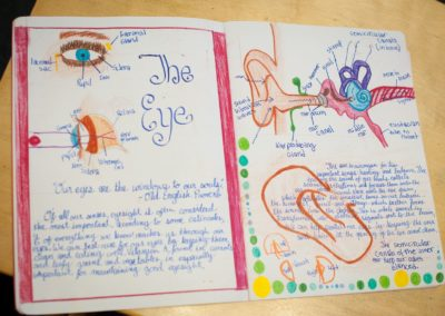 Student main lesson book drawing of the human eye and ear.